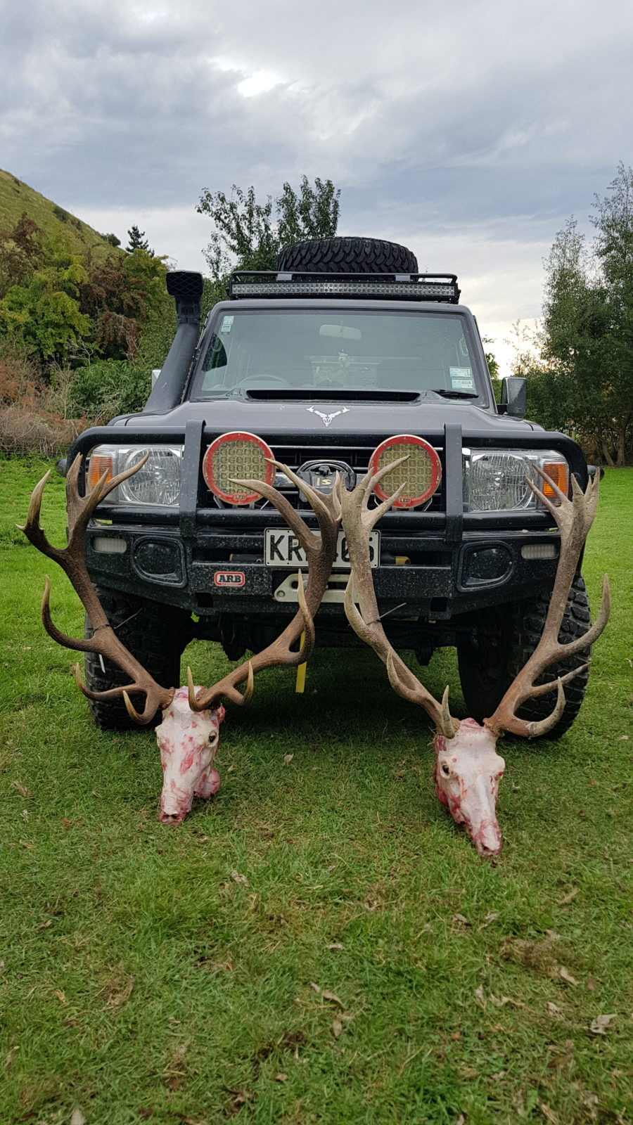 A fine pair of New Zealand Red Stags, one free range and one from managed land.