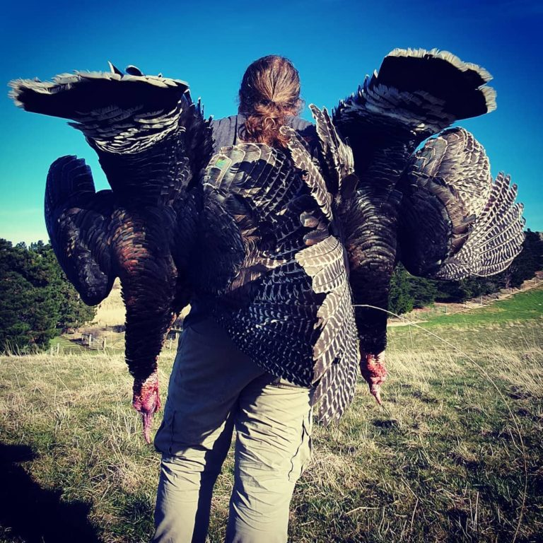 turkey hunting NZ guided turkey hunts New Zealand Otago Queenstown