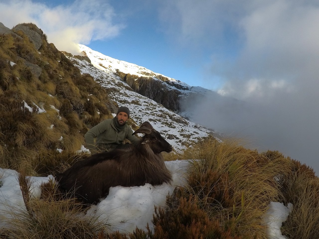South Island New Zealand guided tahr hunting