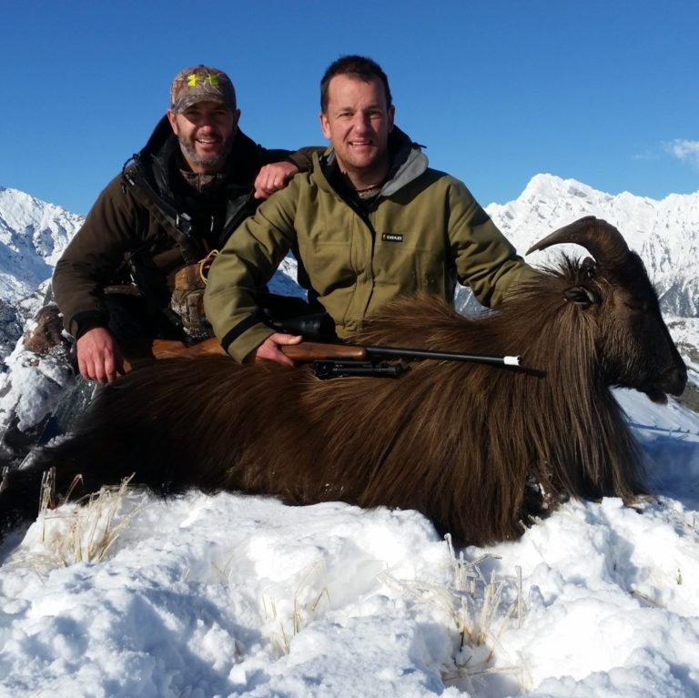 himalayan tahr hunting new zealand red stag
