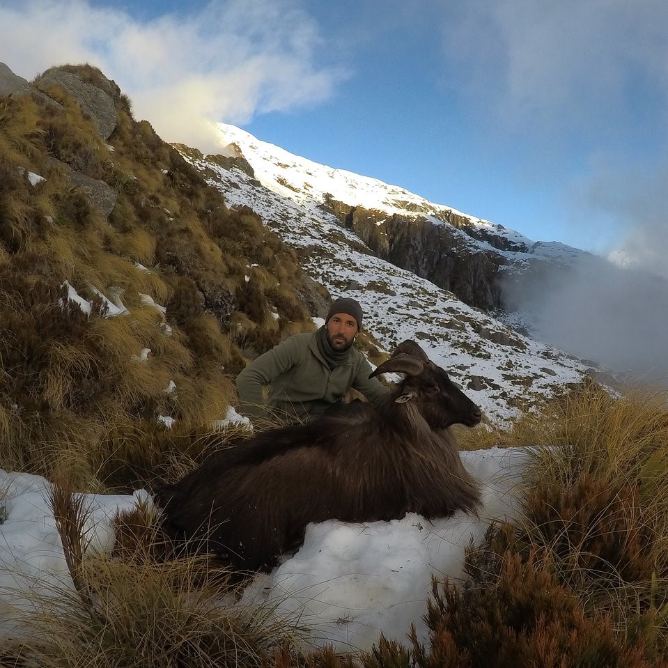 nz tahr hunt new zealand thar