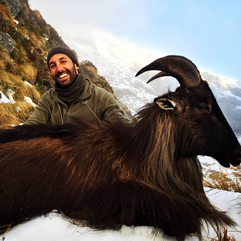 new zealand hunting tahr red stag