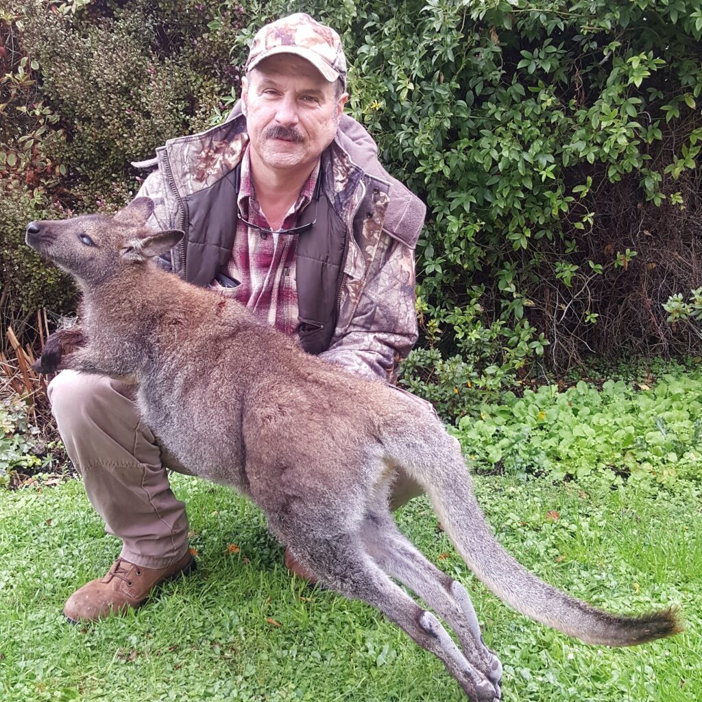 south island wallaby hunting guides nz