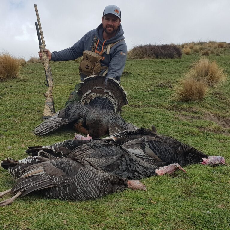 nz turkey guided hunts
