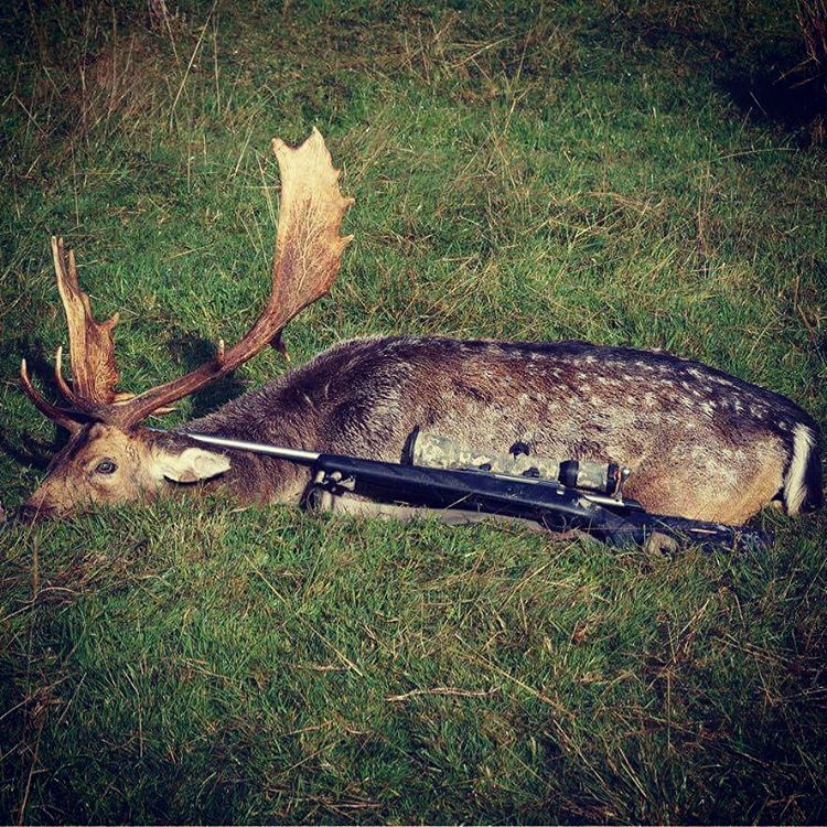 guided fallow buck hunting in new zealand