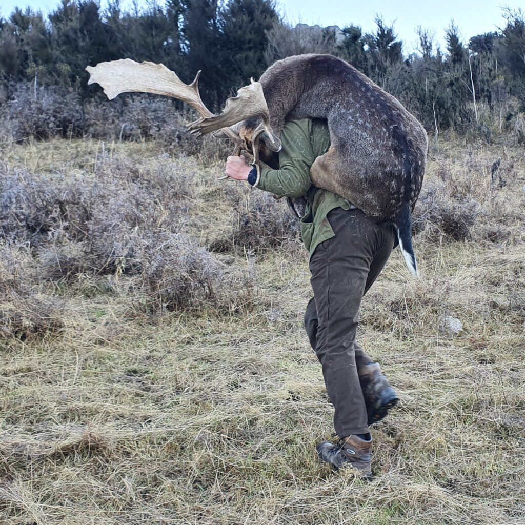 south island deer hunting outfitter guided hunts nz