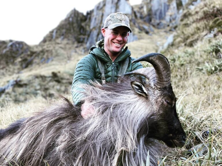 bull tahr hunting southern island new zealand