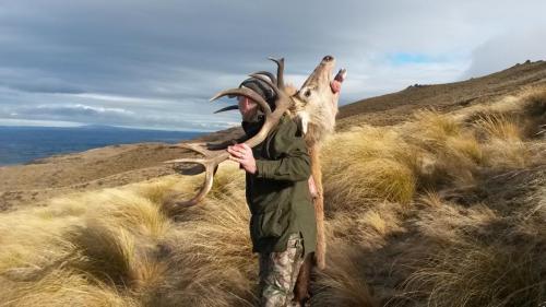 New Zealand Red Stag#huntnewzealand