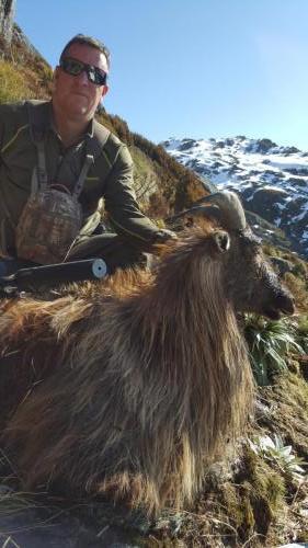 New Zealand Bull Tahr#huntnewzealandinfo@trophyhunting.co.nz